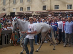 : This is the Pantera district's horse. Two days before the actual race, they have a series of provas, or trials. During these trials, the contrade racing parade their horses into the Piazza and people line up along the road very close to see the horses.